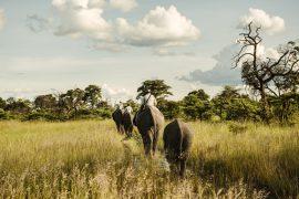 Luxury-Safaris-Botswana-Benjamin-Monn01