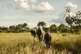Luxury-Safaris-Botswana-Benjamin-Monn01